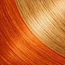 GoldernYellow-Orange